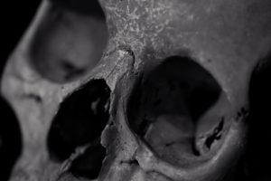 """Skull photo by Jeremy Brooks - """"Feels Like An Old Friend"""""""